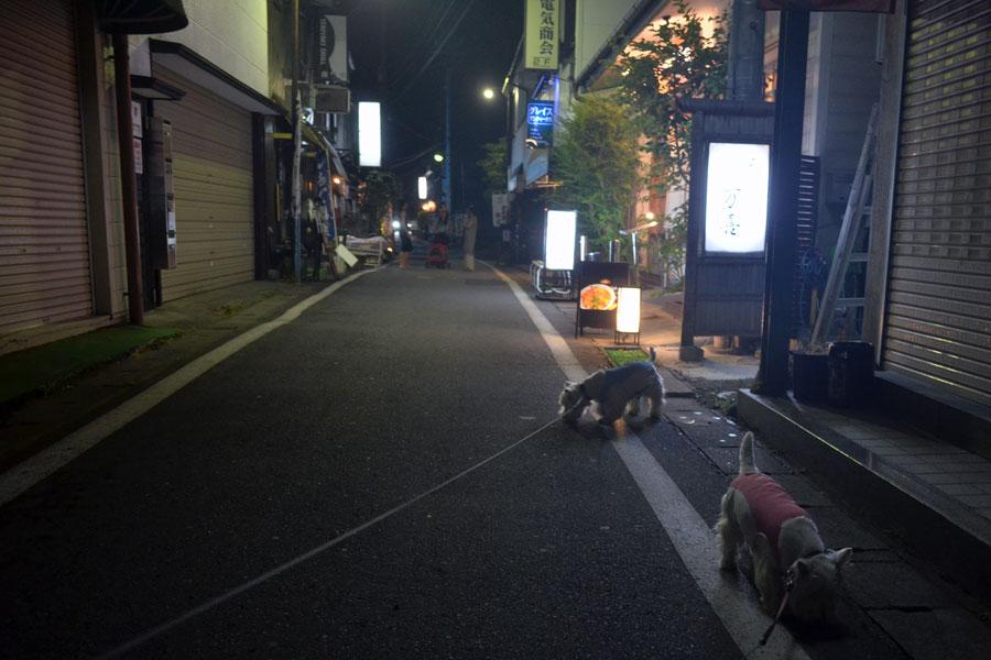 2013suwajinjyanonatumaturi9.jpg