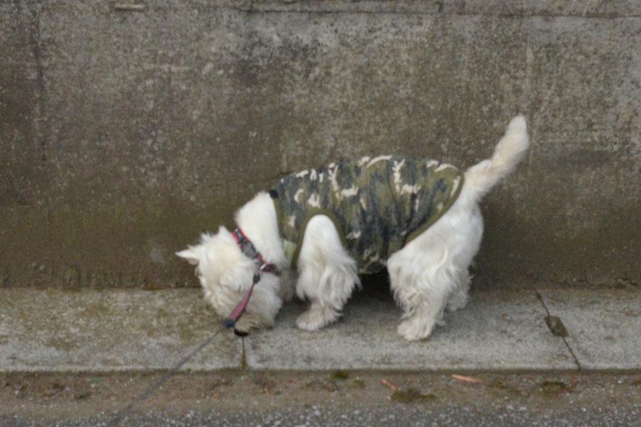 camouflagemeshtank2.jpg