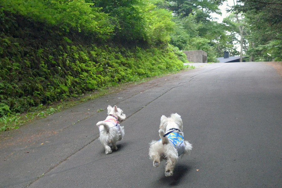 gekizakawokakenobottarisurukara2.jpg