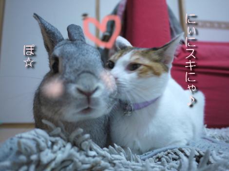猫とウサギという種族の壁を(わりとあっさりw)こえ、いつも仲良しな2匹