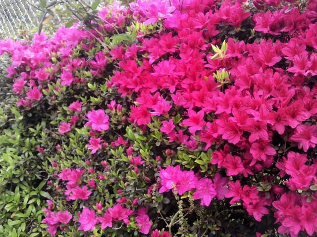 fc2_2013-05-06_12-08-35-424.jpg