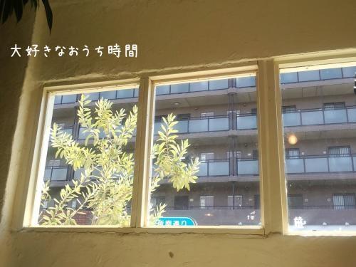 shibaken横縮