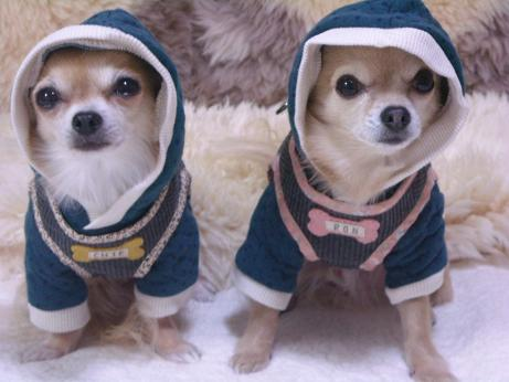 可愛い2ワン達ベストハーネスを着て♪