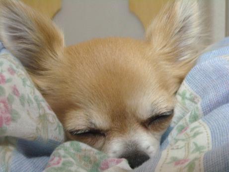 チィの眠り2月5日