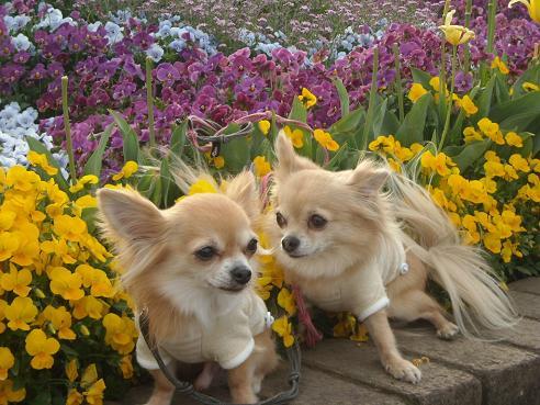 5月3日綺麗なお花とおいら達