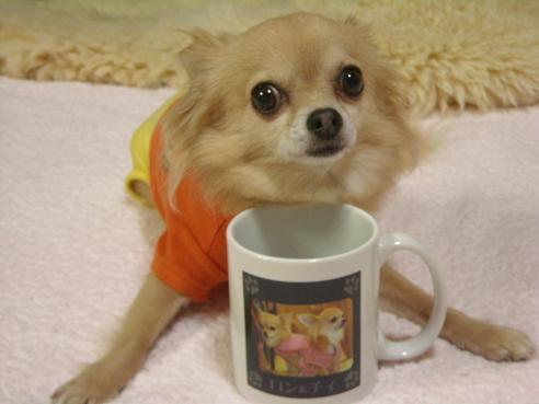 5月12日可愛いロンとカップ