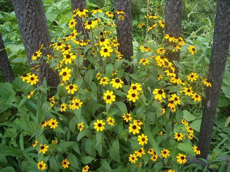 8月10日黄色お花