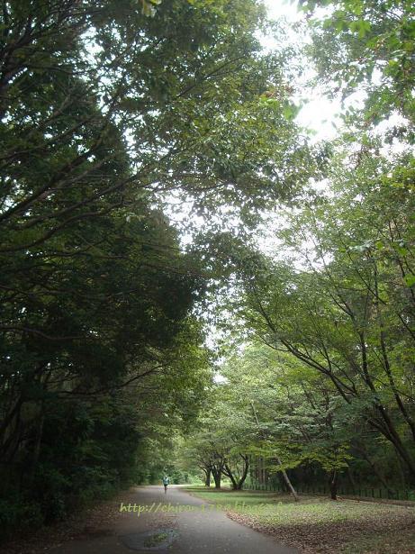 20日のお散歩1