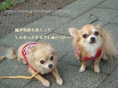 おしゃんぽ10月1日2 - コピー