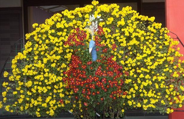 11月16日菊祭り2