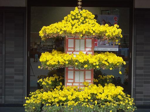 11月16日菊祭り7