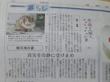 犬と猫と人間と2-6