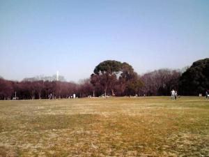 大泉緑地 大芝生広場にて その2(2013年3月9日撮影)