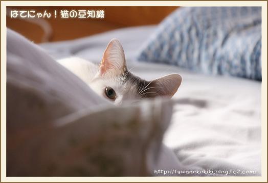 hatenyan_momo_01.jpg