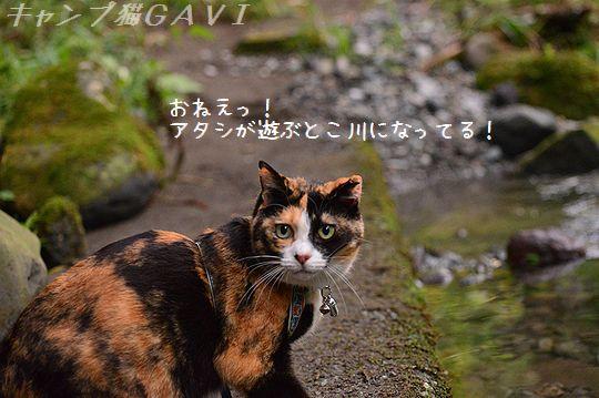 141011_8242.jpg