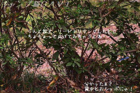 141108_9515a.jpg