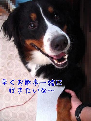 4R_3I_f40Ra66wDh1380721094_1380721321.jpg