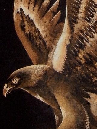 bobby hanane eagle 2010 12