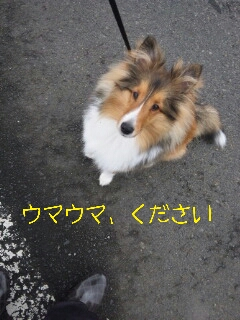 2013-01-28-13-44-54_deco.jpg