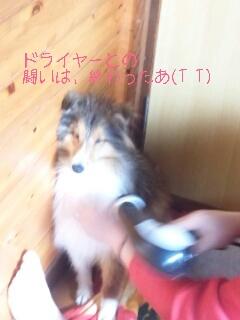 2013-02-12-16-38-08_deco.jpg