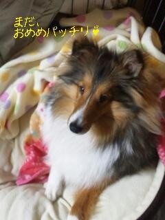2013-02-13-23-29-46_deco.jpg