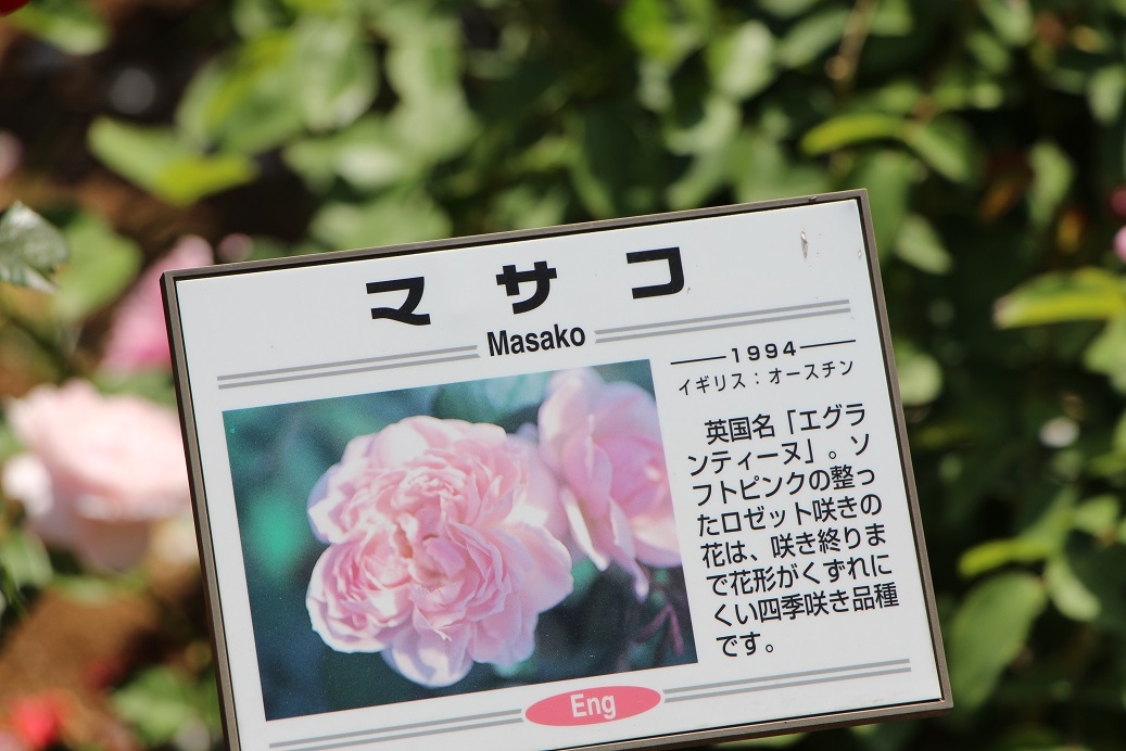 masako1.jpg