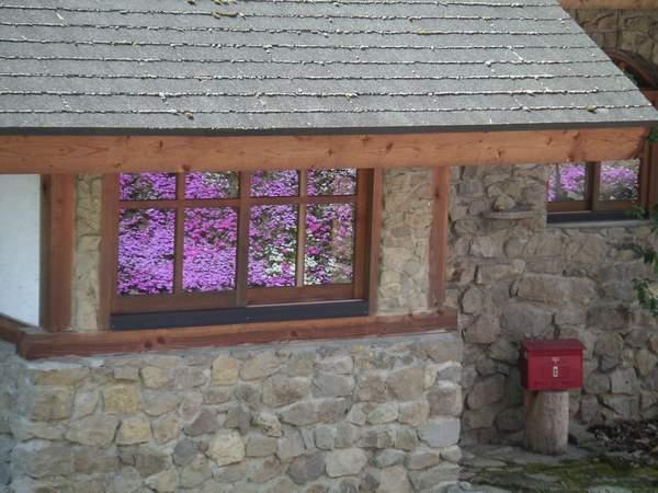 シバザクラ、窓