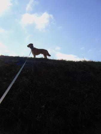 土手の犬5
