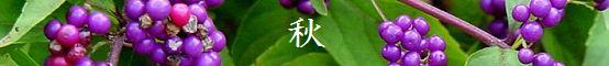 Index_aki_550x60.jpg