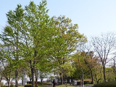 プロムナード 新緑の季節 ②