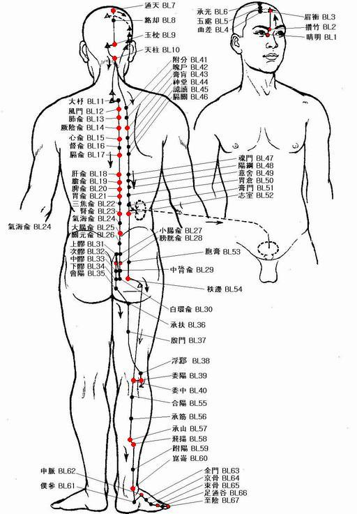 足の太陽膀胱経