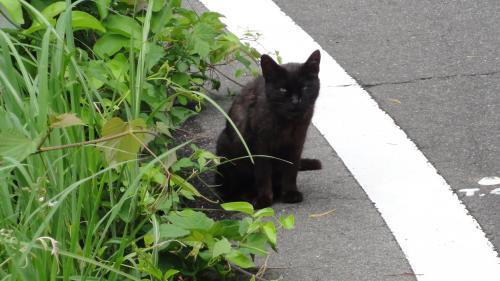 052008ロードパーク沿いの猫