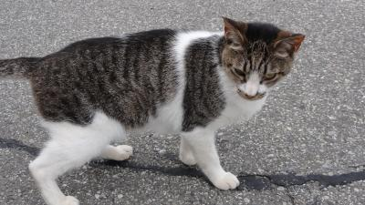 1608総持寺の猫