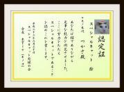 Special Cat-tsukasa
