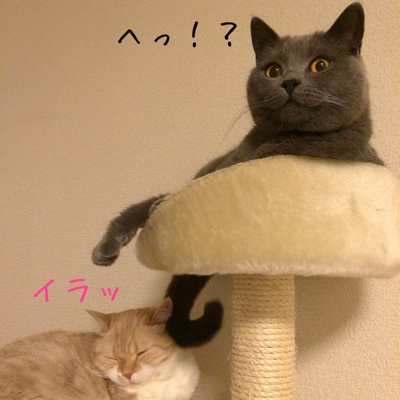 fc2blog_201411192118466b0.jpg