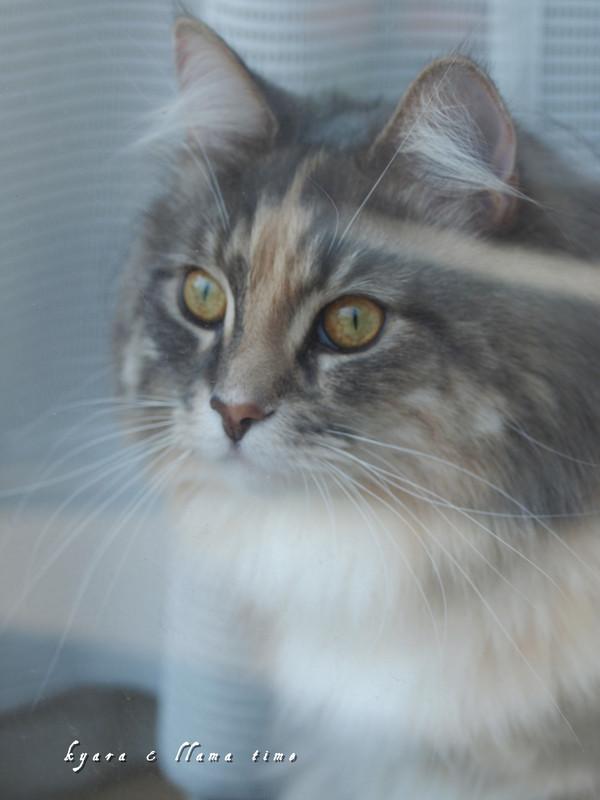 窓辺で母ちゃんを無視する猫