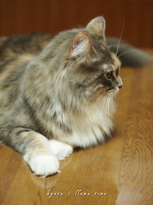 ね 美猫でしょ