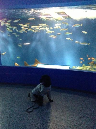 初、水族館。