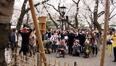 靖国神社の桜(標本木)