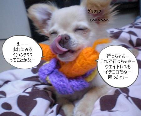 new_CIMG2678.jpg