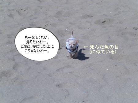 new_CIMG2704.jpg