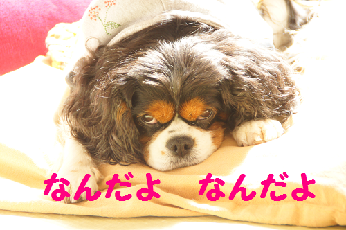 20130328145844bf2.png