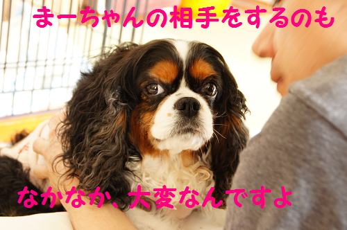2013060316275443a.png