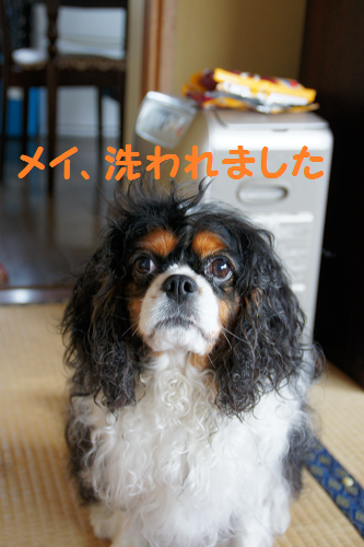 20130618144517a5f.png