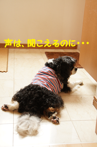 201309061531231ab.png