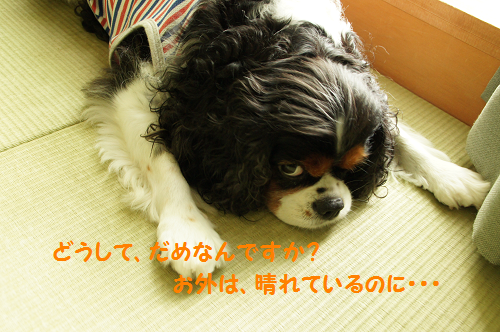 20130912163814052.png