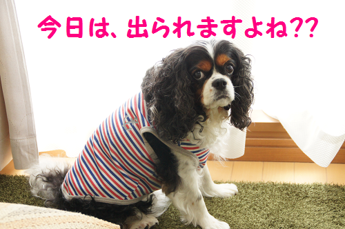 201309121638163f3.png