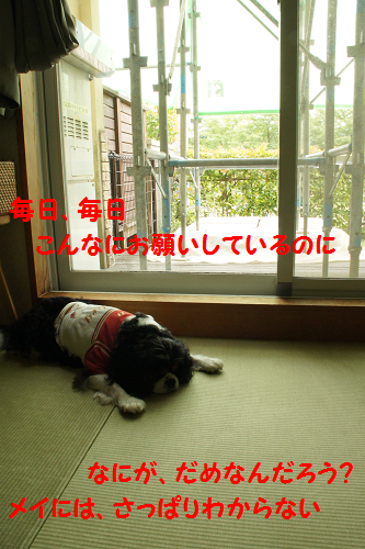 2013091216410714f.png
