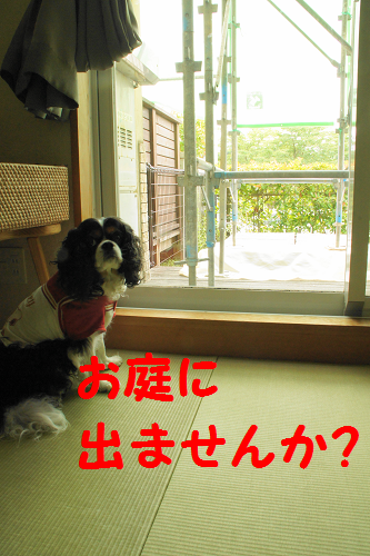 20130912164109811.png