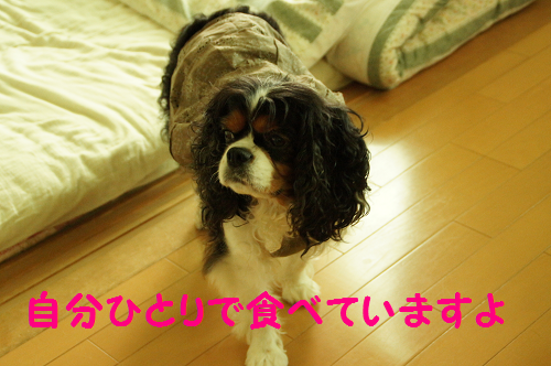 20130918151159b9a.png